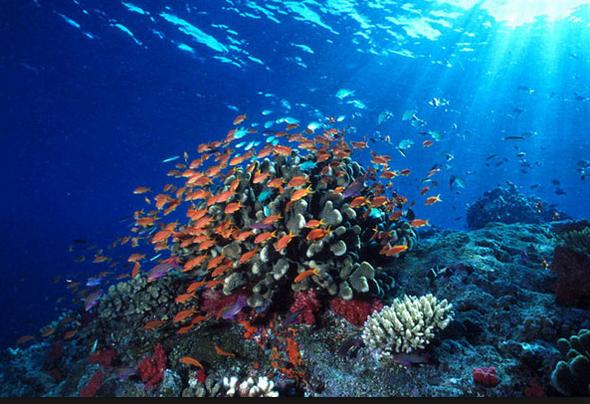 10 Tempat Wisata Indonesai Wajib Dikunjungi Taman laut Bunaken
