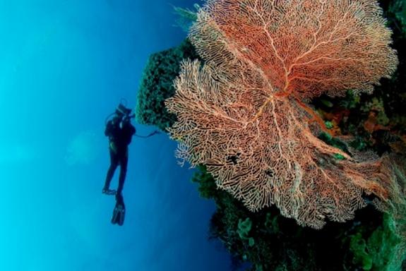 10 Tempat Wisata Indonesai Wajib Dikunjungi Wakatobi