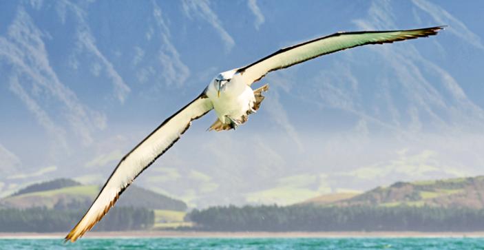 Kaikuora, Wisata Laut Paling Menakjubkan di Dunia