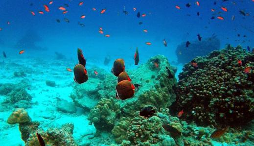 Kecantikan Taman Laut Pulau Rubiah Aceh