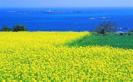 Ini 5 Tempat Wisata Wajib Kamu Kunjungi di Korea Selatan 3