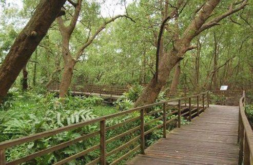Wisata Alam di Hutan Mangrove PIK Jakarta 2