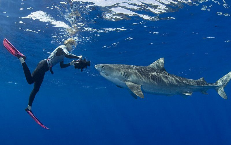 diving with sharks - south africa