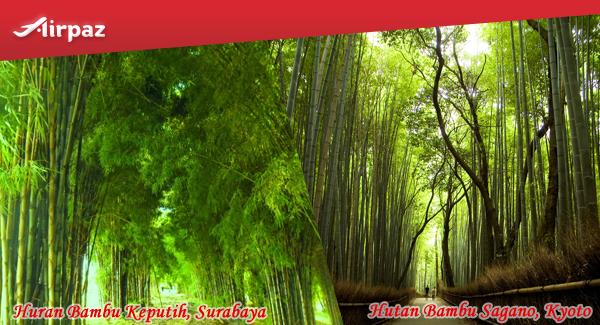 3. hutan bambu keputih & sagano