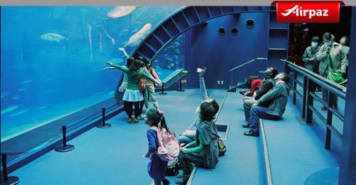 okinawa aquarium japan