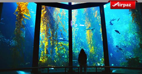 moneytery bay aquarium copy