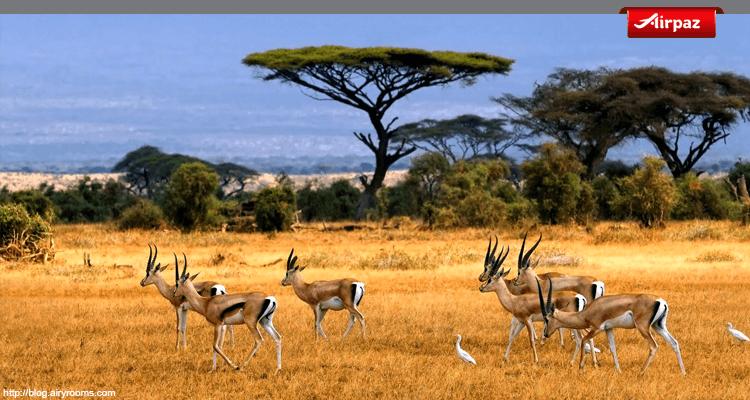 gambar taman nasional baluran