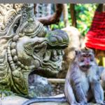 gambar monkey forest ubud