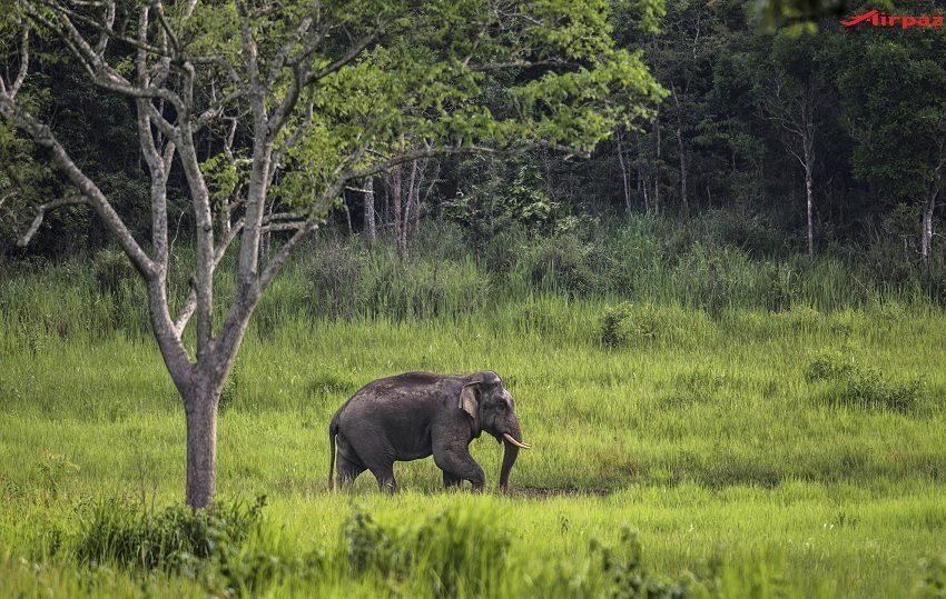 khao-yai-national-park-images