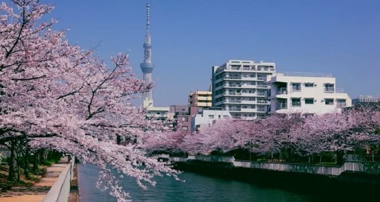 tokyo-sky