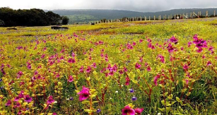 lembah-seribu-bunga