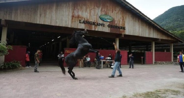 island-horses