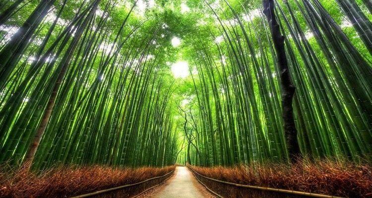 arashiyama-bamboo-forest-1