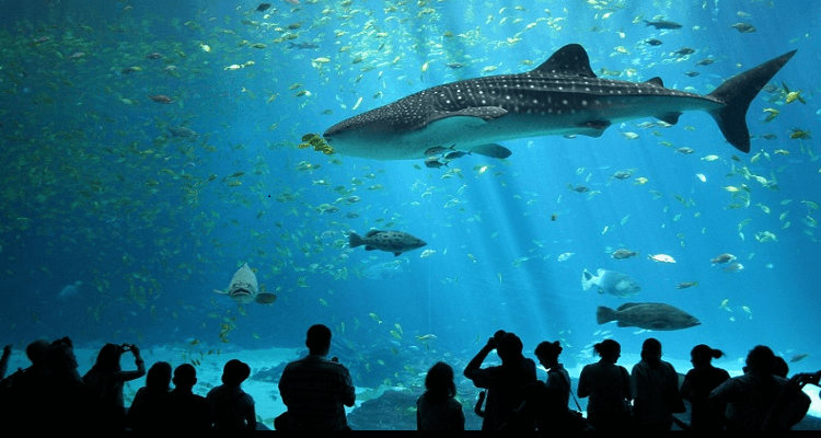 siam-ocean-world-bangkok