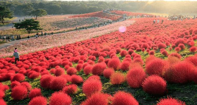 tokyo-in-october