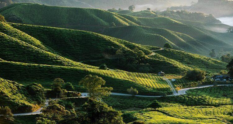 cameron-highland-malaysia