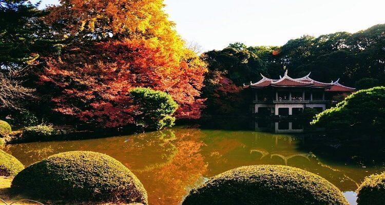 shinjuku-park-japan