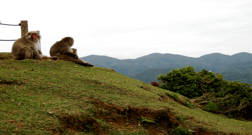 Awaji Island - Awajishima Monkey Center