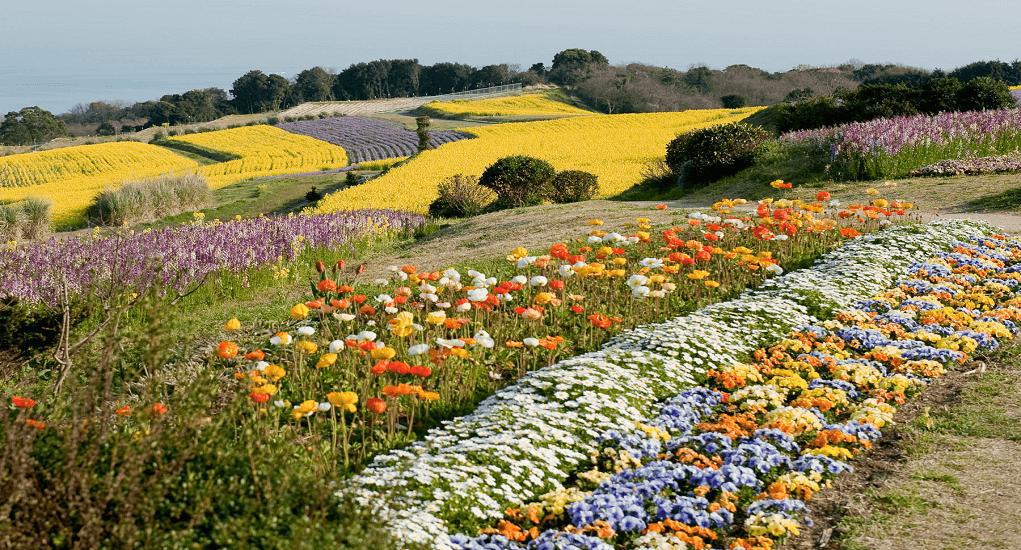 Awaji Island - Hanasajiki Garden