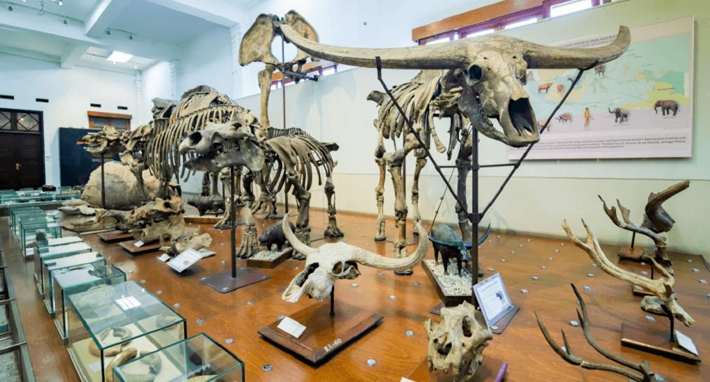 Bandung - Bandung Geology Museum