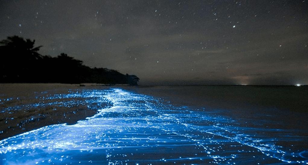 Bioluminescent Beach Phenomenon