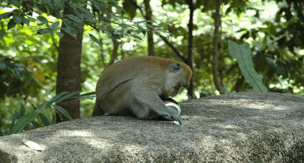 Bukit Timah Nature Reserve - Ragam Flora dan Fauna