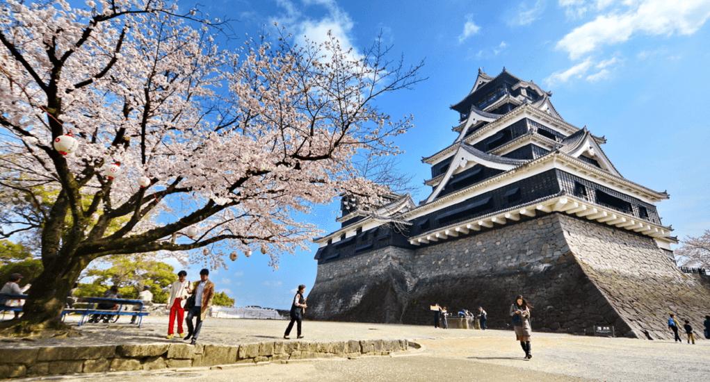 Bunga Sakura - Fukuoka
