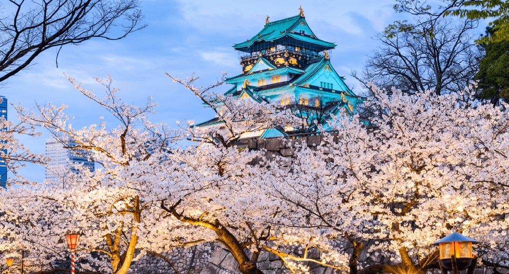 Bunga Sakura - Osaka