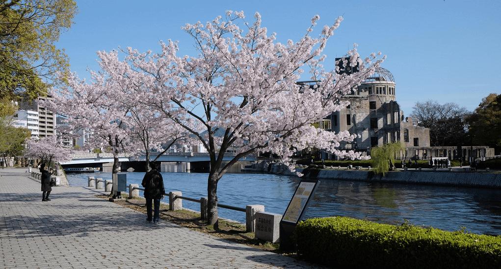 Cherry Blossom - Hiroshima