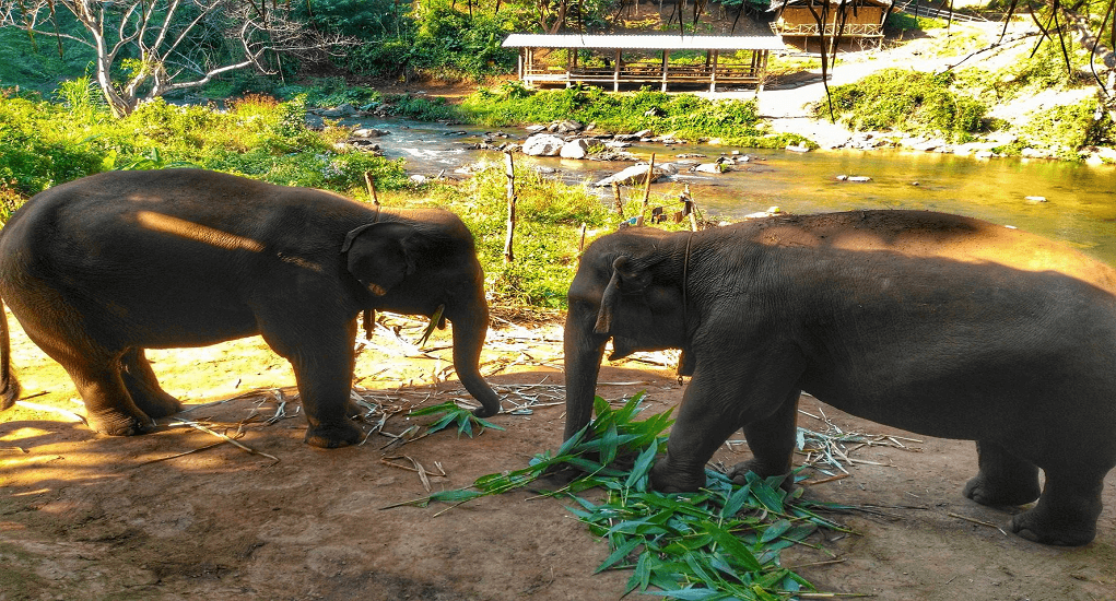 Chiangmai - elephant jungle sanctuary