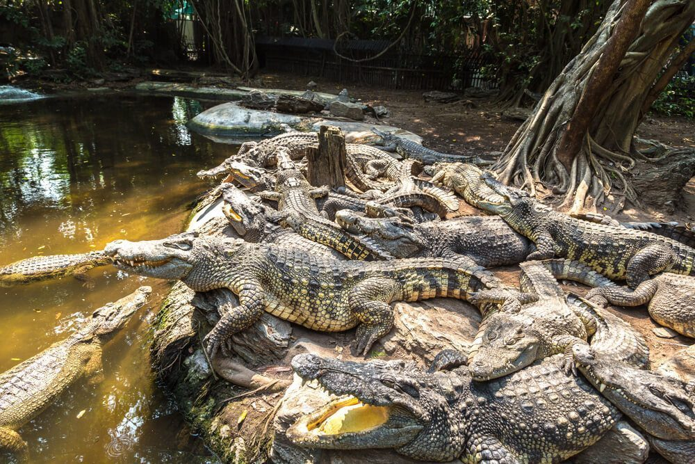 Visit Crocodile Farm to meet plenty of giant reptiles