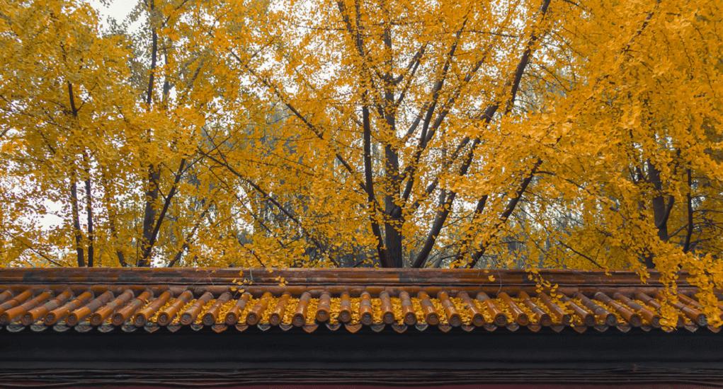 Danyuan Garden