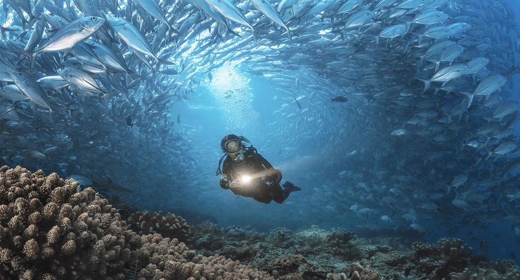 Diving Spots in Malaysia - Sipadan Island