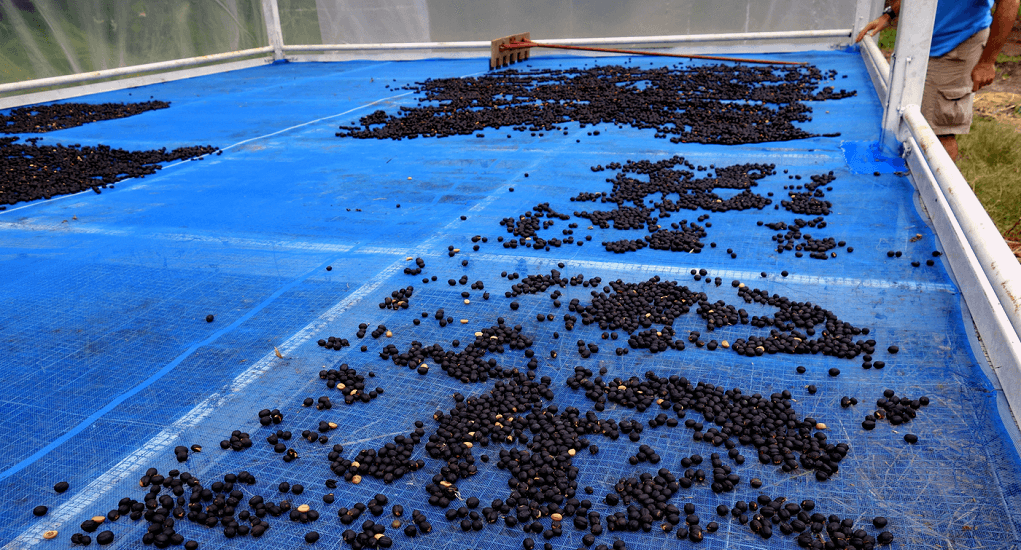 Don Mueang Airport - Black ivory coffee farm