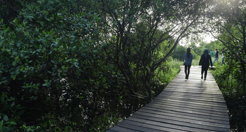 Ekowisata Mangrove - Jalan Kaki