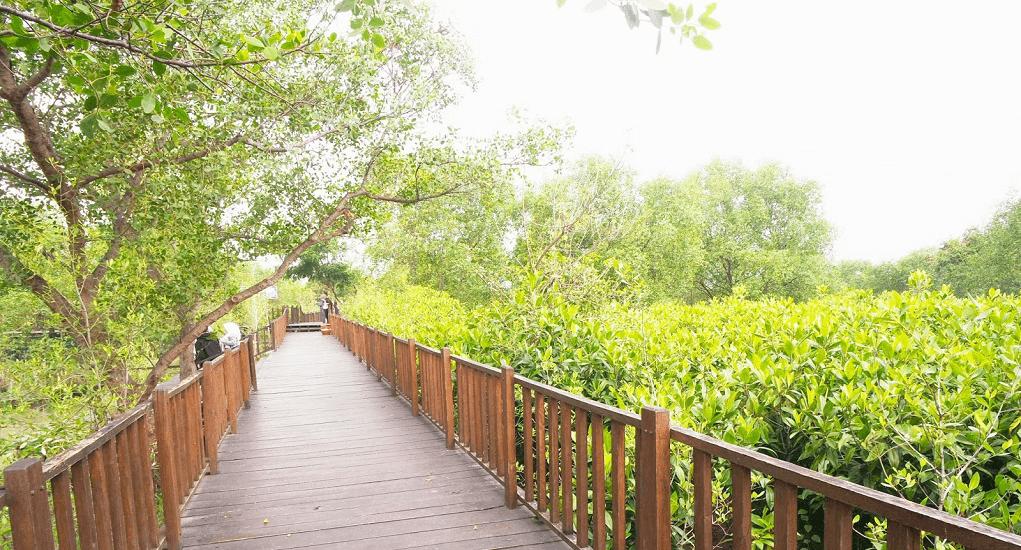 Ekowisata Mangrove - Keindahan Ekowisata Hutan Mangrove