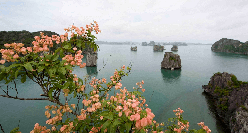 Halong Bay - Spring in Halong bay
