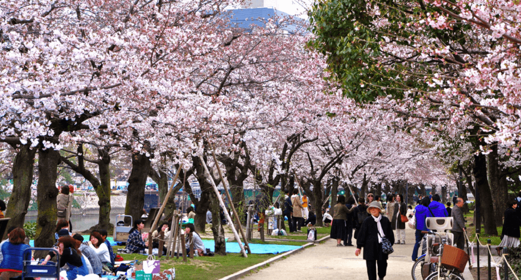 Hanami in Japan - Hiroshima
