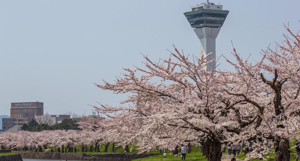Hanami in Japan - Hokkaido