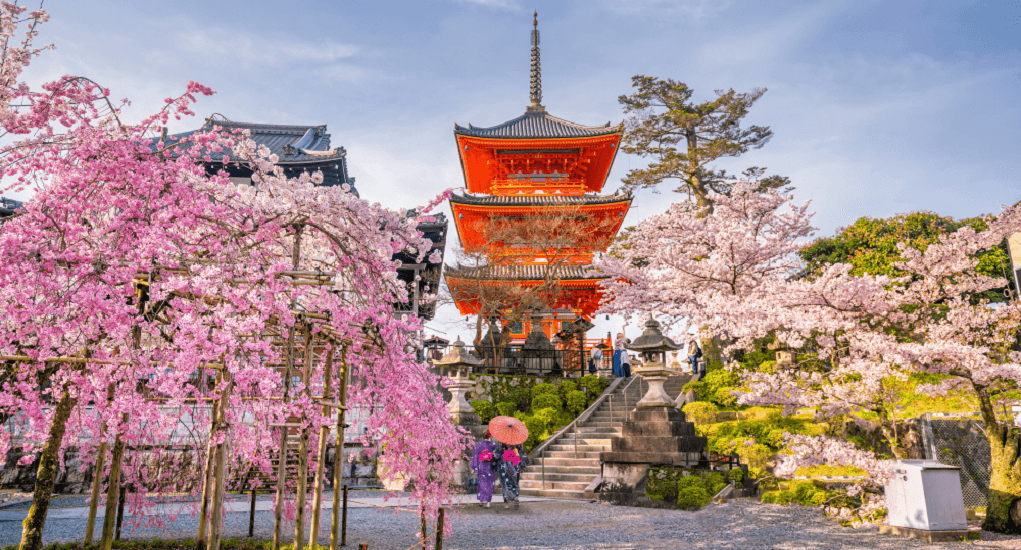 Hanami in Japan - Kyoto