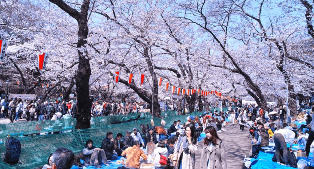 Hanami in Japan - Tokyo