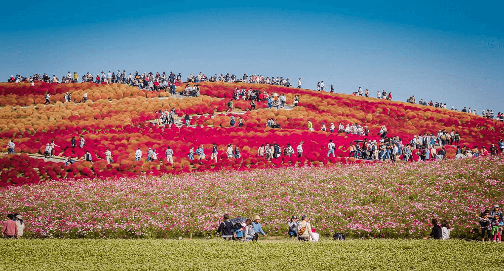 Hitachi Seaside Park - Facts about the Park