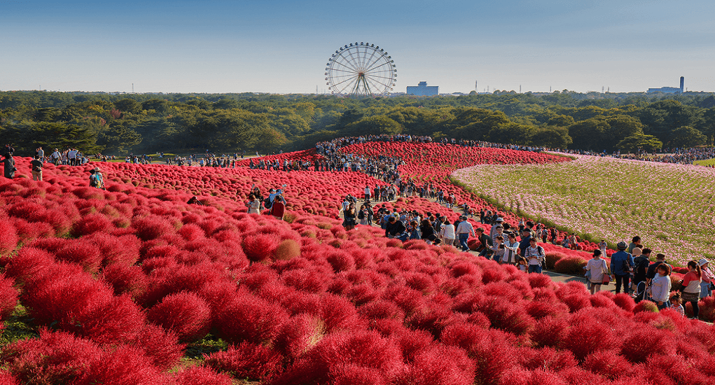 Hitachi Seaside Park - Facts about the Park 2