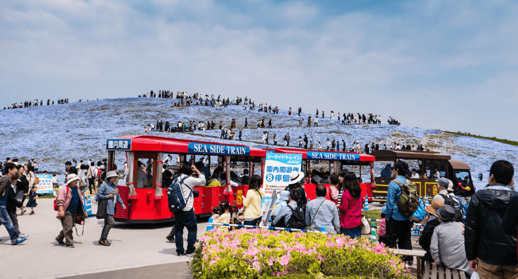 Hitachi Seaside Park - Other Attractions
