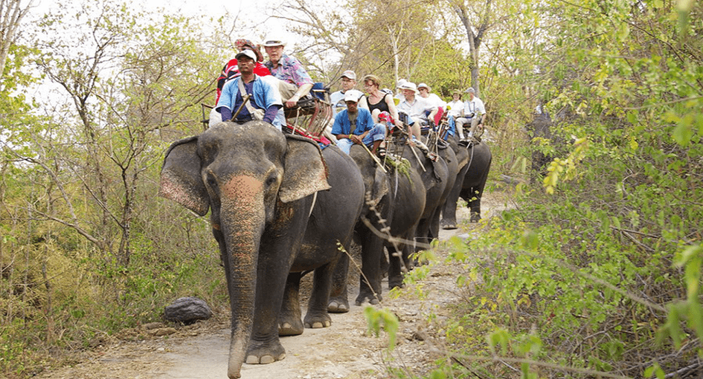 Hua Hin - Hutsadin Elephant Foundation