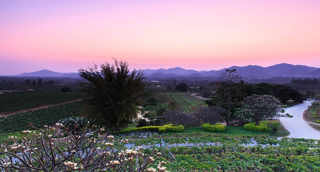 Hua Hin Vineyard Hills