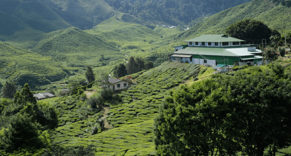 Ipoh is the gateway to Cameron Highlands