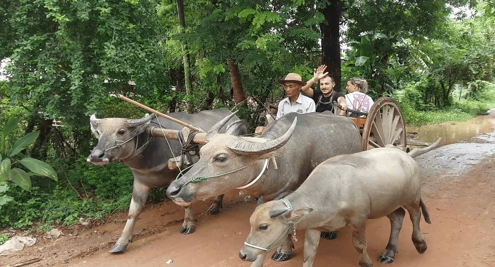 Kamboja - Ox Riding
