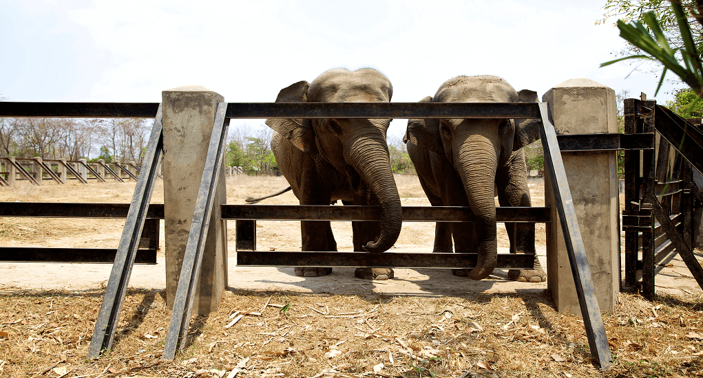 Kamboja - Phnom Tamao Wildlife Park