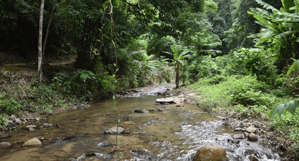 Khao Phanom Bencha National Park - About the Park
